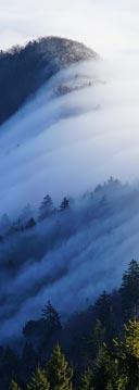Everesting im Schwarzwald mit Morgennebel